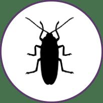 Tipos-de-cucarachas